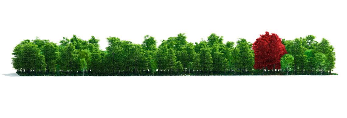 Wenn Sie den Wald vor lauter Bäumen nicht sehen!